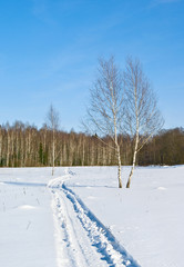 Fototapete - Snowmobile trace on a wood glade