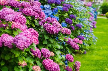 Photo sur Plexiglas Hortensia garden