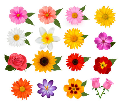 Big set of beautiful colorful flowers. Vector illustration