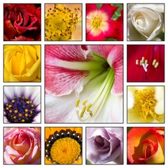 Collage - Flowers