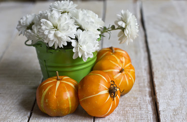 Bunch of bright white flowers in green bucket and pumpkin on whi