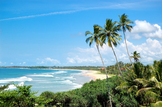 Beach, palms and turquoise water of Indian Ocean, Bentota, Sri L