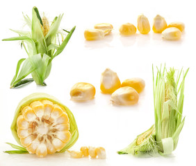 Collection of corn isolated on white background