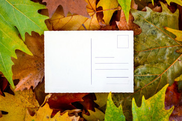Maple leaves with empty postcard