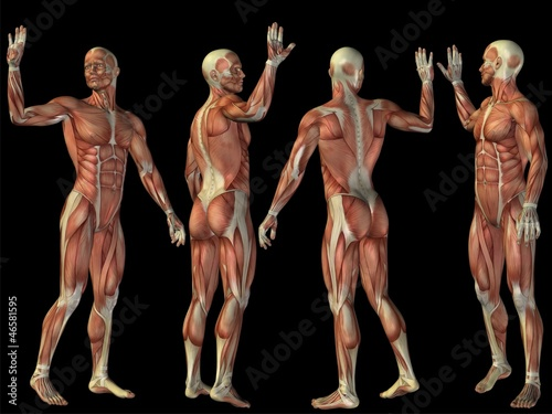 High resolution conceptual human 3D anatomy body with muscle\