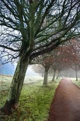 fog in a park3
