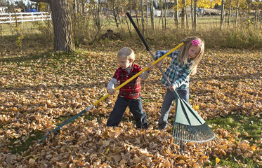 A young boy and a girl raking a big pile of autumn leaves