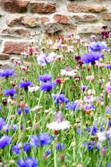Wilde Blumen vor der Mauer