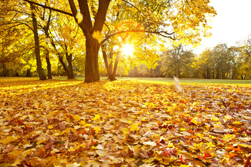 Obraz Jesień - fototapety do salonu