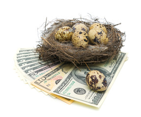 eggs in the nest and money on a white background