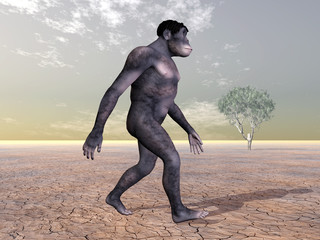 Homo Habilis - The Evolution of Man