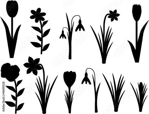 Fruhlingsblumen Silhouette Schwarz Stockfotos Und Lizenzfreie