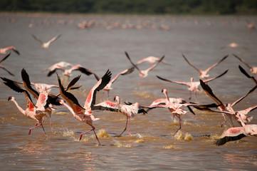 Foto op Aluminium Flamingo Flying flamingos