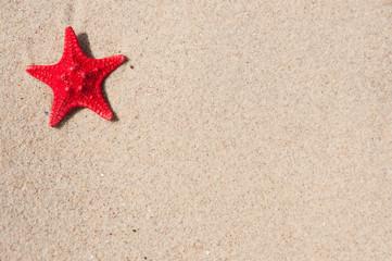 Wall Mural - Seestern und Sand 8