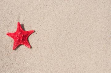 Wall Mural - Seestern und Sand 7