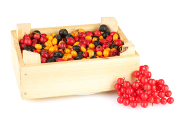 colorful autumn berries in wooden box isolated on white