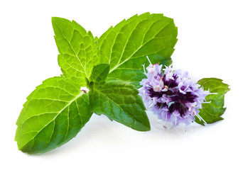 Leaf of mint with flower