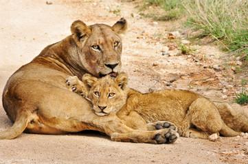 leonessa e cucciolo
