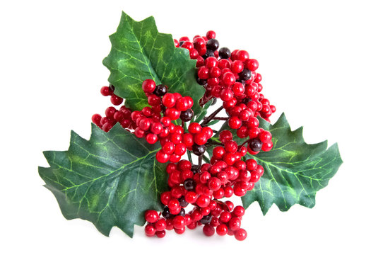 a twig of red Christmas misletoe isolated