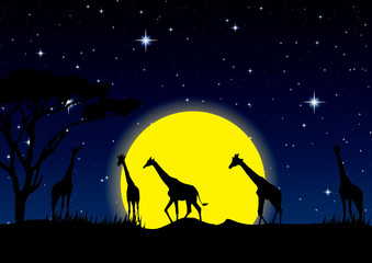 night sky with stars and full Moon in safari