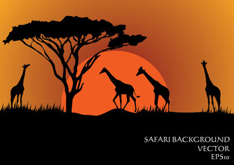 Silhouettes of giraffes in safari sunset background