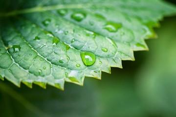 Green leaf,  shallow focus