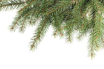 Spruce twig pattern