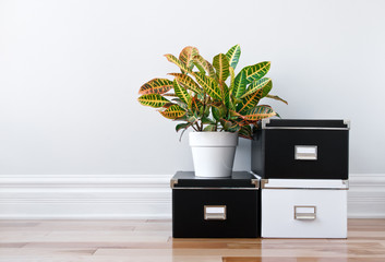 Storage boxes and green plant in a room