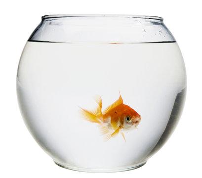 Fish in fishbowl