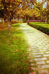Fall, China's urban trail.