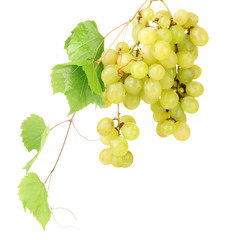 ripe sweet grapes isolated on white.