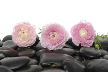 Set of three ranunculus on pebbles