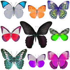 Collection of colored butterflies