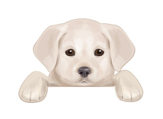 Vector of cute puppy hiding by blank.