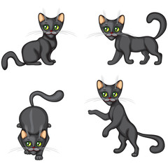 Black Kitten in different poses