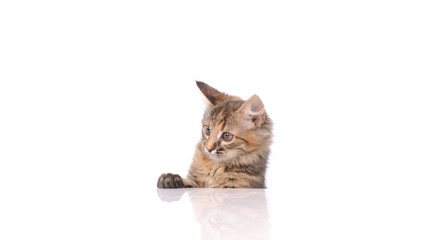 Deurstickers Lynx cute cat isolated on white
