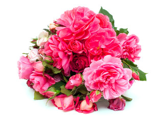 bunch of beautiful pink garden roses isolated on white backgroun