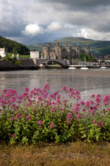 Fototapete - View to Conwy