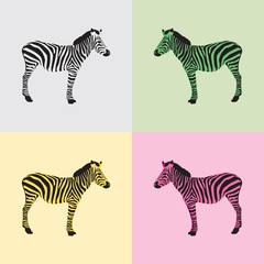 Zebra in black, white, green, yellow and pink color - vector