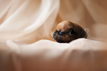 little newborn puppy sleeping