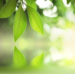 Green leaves over zen water background