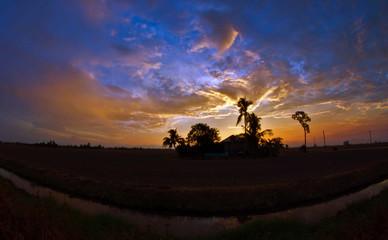 Paddy Field Sunset, Malaysia