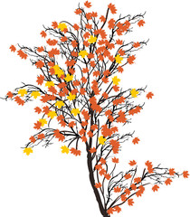 small maple fall tree illustration