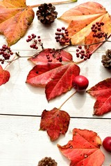 Red ivy leaves with pine cone on white wood