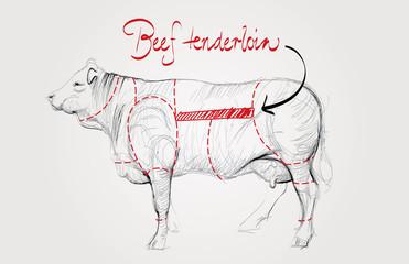 Beef tenderloin / Cuts of cow