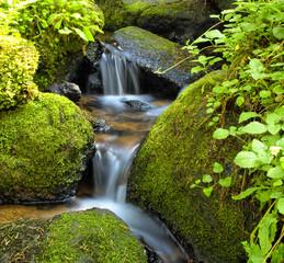 Fototapeta Mountain stream among the mossy stones obraz