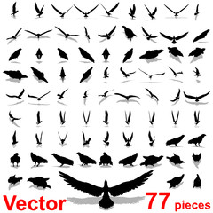Vector collection of black eagle silhouette isolated