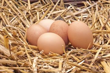 Chicken eggs in the nest