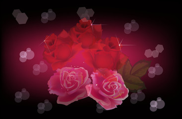 pink and red rose flowers on dark background