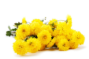 Bouquet of yellow flowers, chrysanthemums isolated on white back